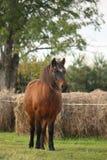 Cute pony standing near the hay Stock Photos