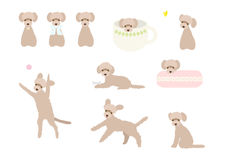 Cute poodle illustration set. Movement of everyday's pet. Royalty Free Stock Photo