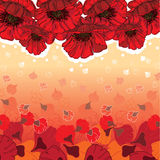 Cute poppies card Royalty Free Stock Photo