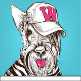 Cute portrait of a Scottish Terrier. Wearing a cap. Vector illustration Royalty Free Stock Images