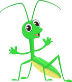 Cute Praying mantis grasshopper cartoon. Vector Illustration of cute Praying mantis grasshopper cartoon     on white Stock Images