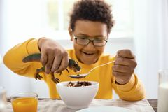 Cute pre-teen boy giving cereals to its toy dinosaur. Delicious snack. Pleasant pre-teen boy eating cereals for breakfast and feeding them to his toy dinosaur Stock Image