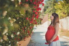 Cute pregnant young mother in airy red whit dress posing enjoying summer day close to red pink roses bush on fence holding her tum Stock Photos