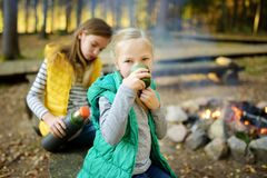 Cute preteen girl drinking tea and roasting marshmallows on stick at bonfire. Child having fun at camp fire. Camping with children royalty free stock photo
