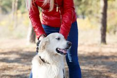 Beautiful smiling dog walking with owner outdoors. Pet concept. Cute pretty doggie having fun with owner in the forest. Dog and owner walking on the nature Royalty Free Stock Photos