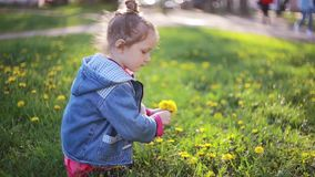 Cute pretty girl making bouquet of dandelions on a sunny day. Beautiful little lady choosing best flowers. stock footage