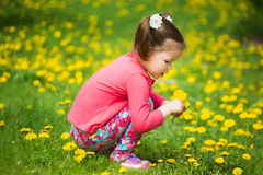 Cute pretty little girl  with yellow dandelions Royalty Free Stock Photography