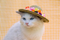 Cute pretty Ragdoll cat with a hat. Pretty cute Ragdoll wearing straw hat with flowers Stock Photos