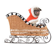 A cute pug in a christmas hat Stock Photos