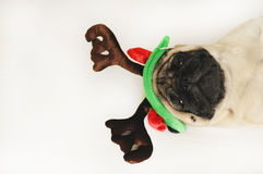 Cute pug in Christmas horns Royalty Free Stock Photography