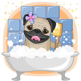 Cute Pug Dog Royalty Free Stock Photos
