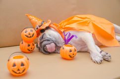 Cute pug dog with costume of happy halloween day sleep rest on s Royalty Free Stock Images