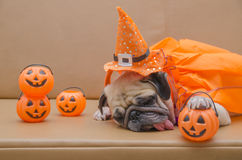 Cute pug dog with costume of happy halloween day sleep rest Stock Photos