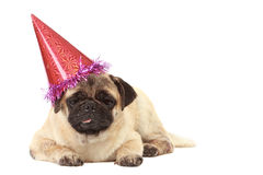 Cute Pug dog with hat on white background Royalty Free Stock Images