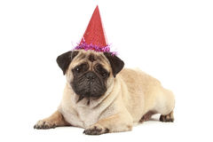 Cute Pug dog with hat on white background Stock Photo