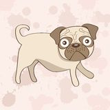Cute pug dog Stock Photos