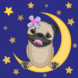 Cute Pug Dog on the moon Royalty Free Stock Image