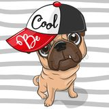 Cute Pug Dog with a red cap. Cute Cartoon Pug Dog with a red cap on striped background stock illustration