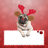 Cute pug dog with reindeer ears and antlers, leaning on blank sign on red background with snowflakes Stock Image