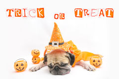 Cute Pug Dog sleep rest and tongue sticking out with Happy Halloween day and pumpkin. Concept Stock Photography