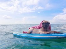 Cute pug dog surfing on a surfboard resting at the ocean shore. Cute pug dog surfing on surfboard resting at the ocean shore royalty free stock images