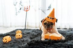 Free Cute Pug Dog With Halloween Costume Party At Home Royalty Free Stock Images - 160375759