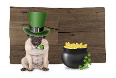 Cute pug puppy dog with st. patrick`s day hat and pipe sitting next to pot with gold and shamrock, on wooden background Stock Photography