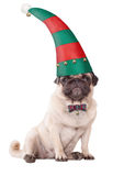 Cute pug puppy dog wearing an elf hat for christmas, on white background Royalty Free Stock Images