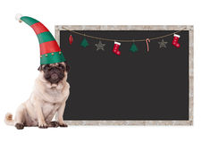 Cute pug puppy dog wearing an elf hat, sitting next to blank blackboard sign with christmas decoration, on white bac Stock Photos