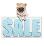 Cute pug puppy dog wearing knitted hat for winter cold, hanging with paws on big sale sign, isolated on white background Stock Photography