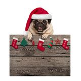 Cute pug puppy dog wearing santa hat hanging with paws old wooden sign with Christmas decoration,. Isolated on white background Royalty Free Stock Images