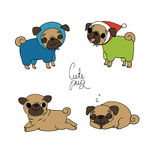 Cute Pugs. Pet clothes. Royalty Free Stock Photos