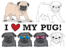 Cute pugs Royalty Free Stock Photography