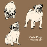 Cute pugs vector set, dogs Royalty Free Stock Images