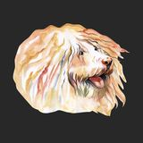 Cute Puli Cartoon Dog. Watercolor illustration of purebred puli dog. Cute Puli Cartoon Dog. Watercolor illustration of purebred puli dog stock photo
