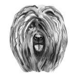 Cute Puli Cartoon Dog. Watercolor illustration of purebred puli dog. Cute Puli Cartoon Dog. Watercolor illustration of purebred puli dog royalty free stock photo