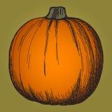 Cute pumpkin sketch Stock Photography
