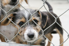 Cute pup in a cage. Homeless animals series. Cute scruffy pup looking out of his pen stock image
