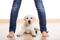 Cute pupie under the legs Royalty Free Stock Photo