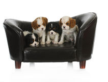 Cute puppies Stock Image