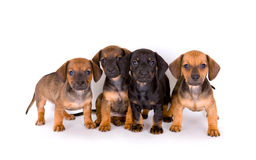 Cute puppies. Group of adorable puppies, isolated on white Royalty Free Stock Photo
