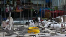 Cute puppies in cage on market. Adorable puppies kept in cage with bare floor on Chatuchak Market in Bangkok, Thailand