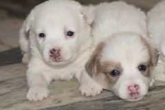 Cute puppies;Dogs are our link to paradise. stock photo