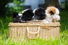 Cute puppies Stock Photos