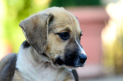 Cute puppies Stock Photography