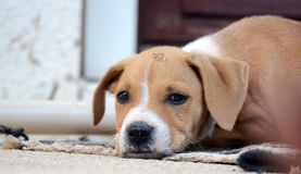 Cute puppies Royalty Free Stock Photos