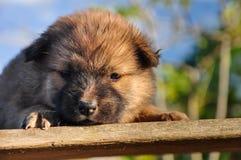 Sleep puppy Stock Images