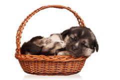 Cute puppy Stock Image