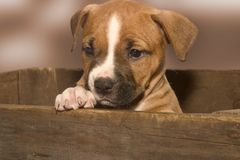 Cute puppy. Puppy in a box stock photos