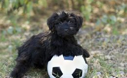 Cute Puppy Ball Royalty Free Stock Image